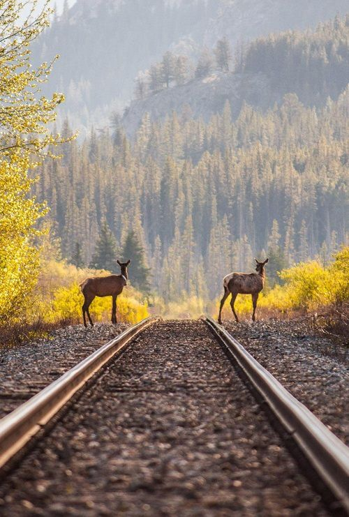 painting old beautiful train - photo #28