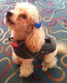 Does your pup feel happy, confident and safe in their #CalmingCoat? #PetAnxiety #Solution