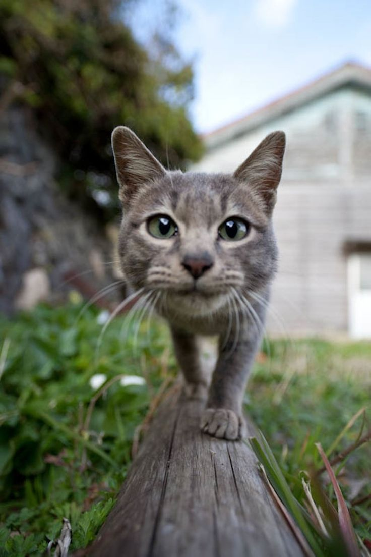 Photographer Fubirai has spent the last five years documenting the lives of the semi-wild cats that roam the island in Fukuoka, Japan. The cats are fed by local fishermen and wander freely through the streets, boatyards, porches, and houses of the city. Heaven.