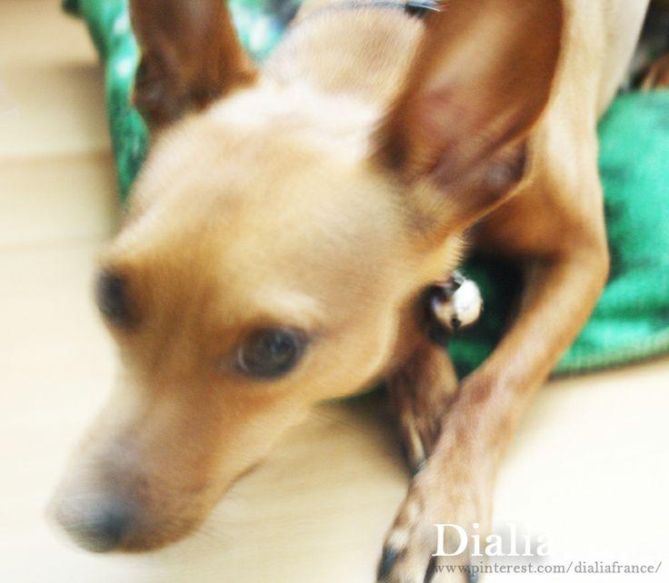 Mon chien  My dog