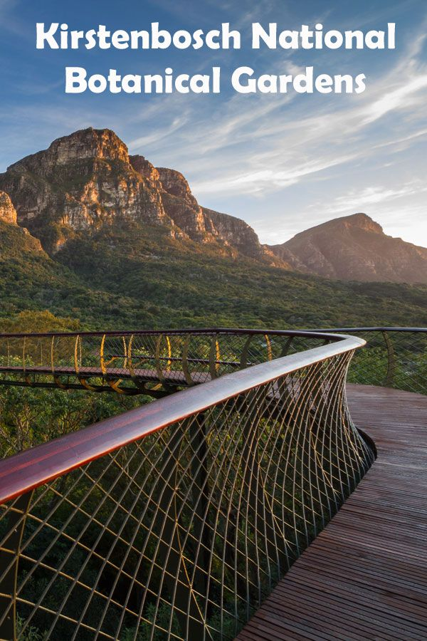 Visiting Kirstenbosch National Botanical Gardens is a great family outing and the perfect place for our kids to learn and experience the best of nature, and plenty of space for them to run wild.
