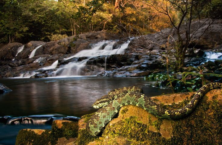 Agumbe adventure: Reptiles and waterfalls in the rainforests of Karnataka