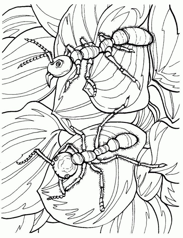 Kolorowanki mrówek
