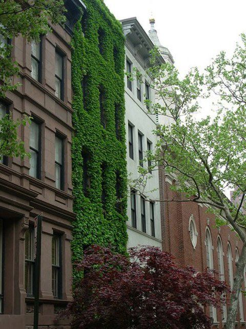Ivy-Covered Houses: Magical or Malicious?