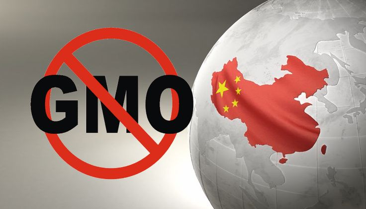 Breaking News: China Destroys 3 US Shipments of GM Corn - (http://www.greenmedinfo.com/blog/breaking-news-china-destroys-3-us-shipments-gm-corn-a)