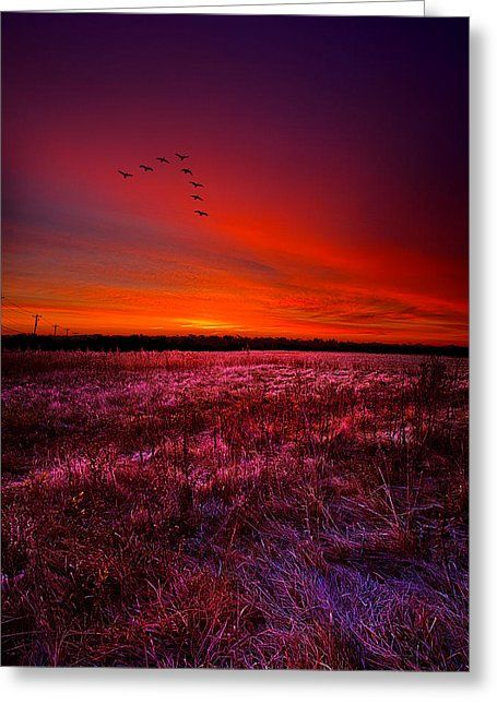 Early To Rise Greeting Card by Phil Koch