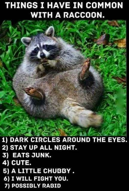 Things I have in common with a raccoon...LOL