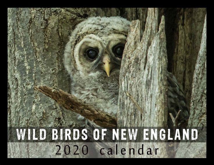 2020 Calendar Wild Birds Of New England
