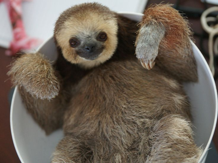 SLOTHS! to take you to the weekend with smiles!