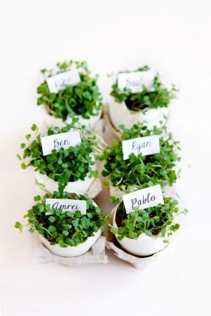 Easter place card idea: eggshells filed with cress