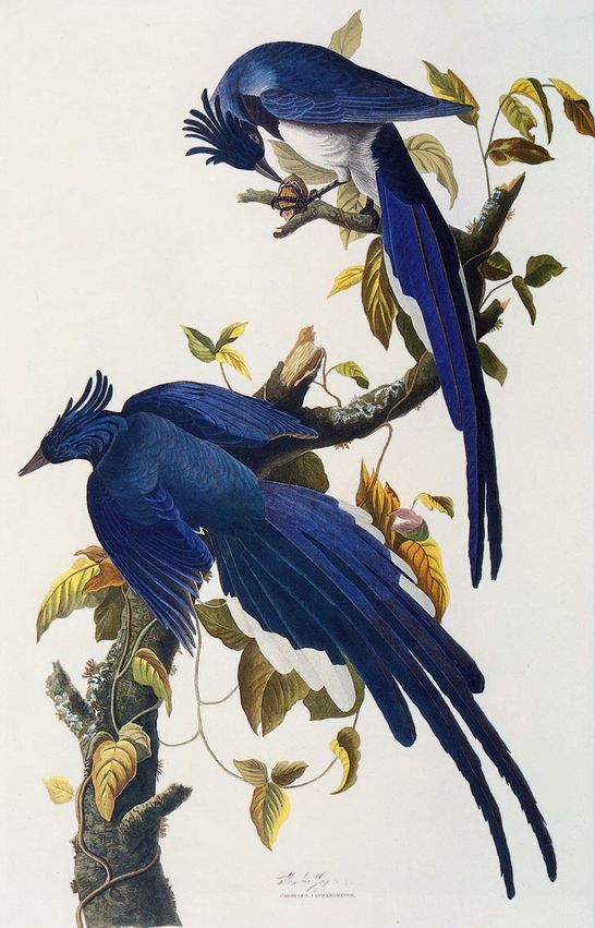 John James Audubon - My Momma had this in her home for years...now my son and daughter-in-law have it in their apartment.