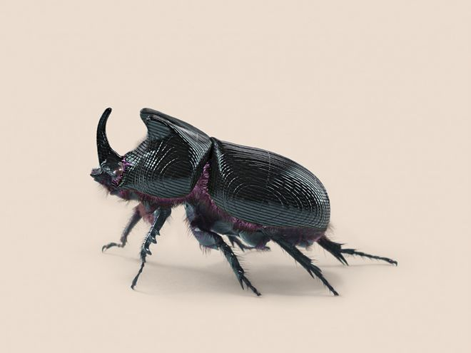 Nature 2.0: The Superpowered, GPS-Enabled Critters of the Future | Vincent Fournier re-imagined animals as highly evolved techno-animals. This beetle has a GPS receiver in its horn and secretes a two-layer ABS/plexiglass material.  Vincent Fournier  | WIRED.com