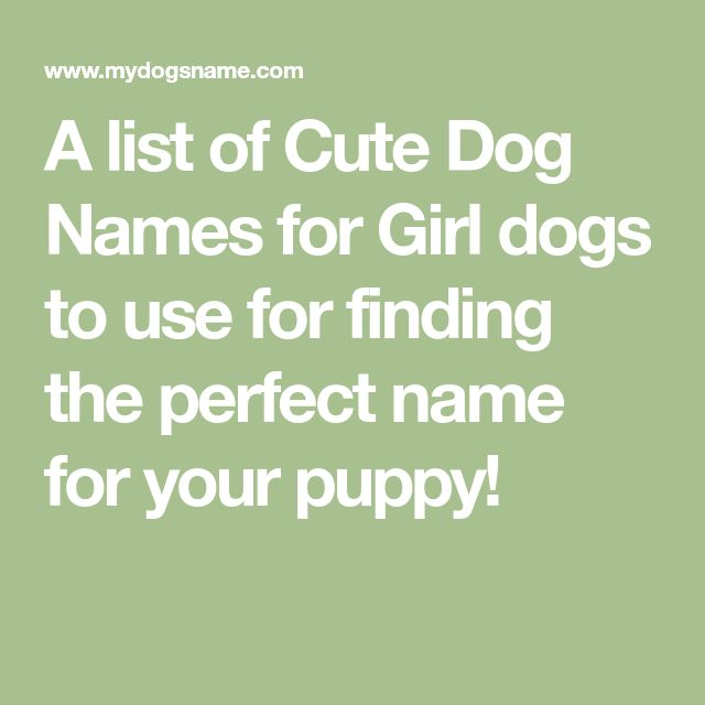 A list of Cute Dog Names for Girl dogs to use for finding the perfect name for your puppy!