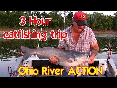 Ohio River Action:Fishing for Blue catfish around mussel beds - YouTube
