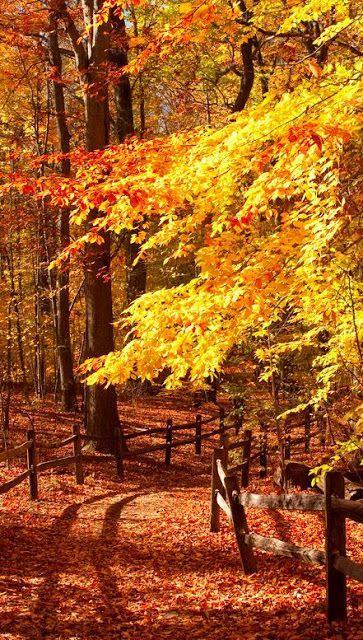 Autumn Source Central Park NYC Source Gorgeous colors Source Lake Louise, Banff National Park, Alberta, Canada.....