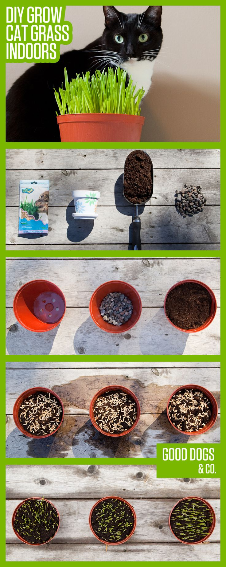 Super easy DIY to grow cat grass indoors! Bring the outside in and let your cat enjoy a healthy snack!