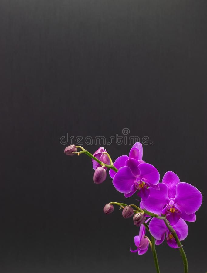 Beautiful Pink Orchid Phalaenopsis On Dark Background Pink Orchid Phalaenopsis Sponsored Orchid Pink Beautiful Ph Pink Orchids Orchids Phalaenopsis
