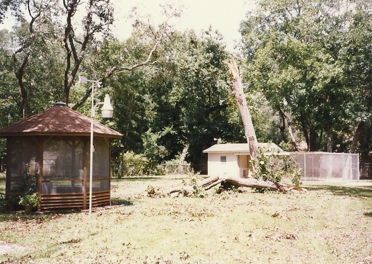 Hurricane Opal aftermath