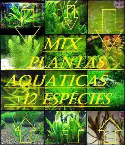 kit 120 sementes sortidas de plantas aquaticas 12 espécies