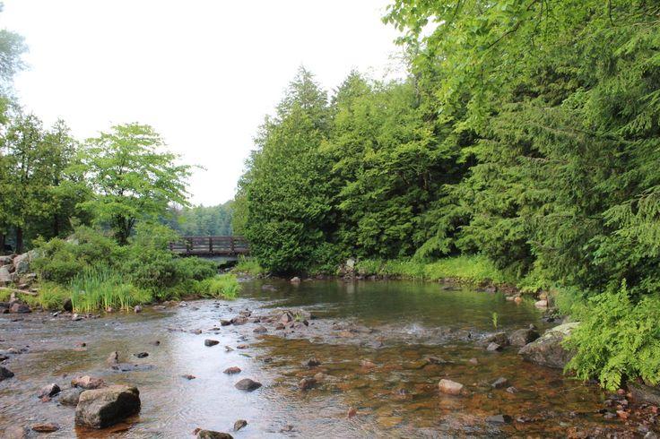 Ruisseau et pont.