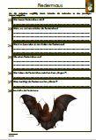 Unterrichtsmaterial für den #Biologieunterricht.  Verschiedene Fragen zu dem Thema: Fledermaus •Aussehen •Nahrung •Feinde •Eigenschaften •Körperteile •Fledermausarten •Überwinterung •Lebensweise •Nachtaktive Tiere •Nachwuchs •Lebensraum •Orientierung •Überwinterung •Wochenstube •Aussterben •Lückentext •55 Fragen •1 x Lernzielkontrolle •Ausführliche Lösungen