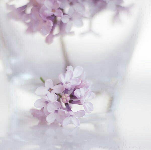 736 besten SOFT Bilder auf Pinterest | Schöne bilder, Schöne blumen ...