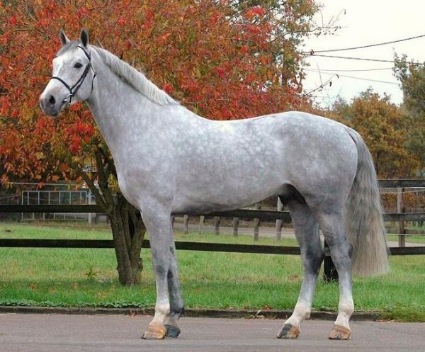"""I don't usually pin pictures of horses """"posing"""" like this but this horse is positively gorgeous."""