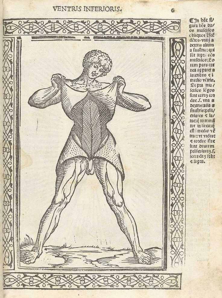 27 best Anatomia Carpi images on Pinterest | Exhibitions, Role play ...