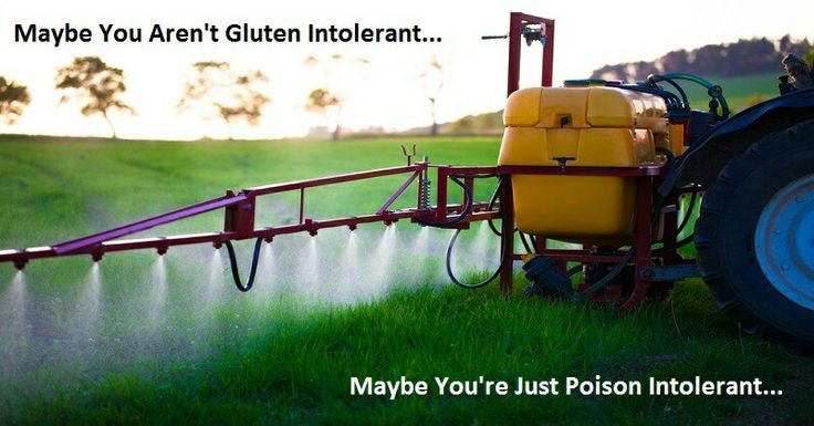 Roundup is commonly used in wheat production. This is shocking! https://youtu.be/nhoTgQGKX3g