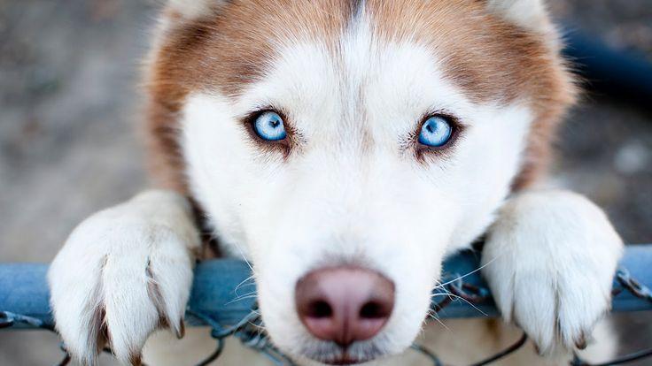 Самые преданные собаки в мире! Собаки верные друзья. Топ самых преданных...