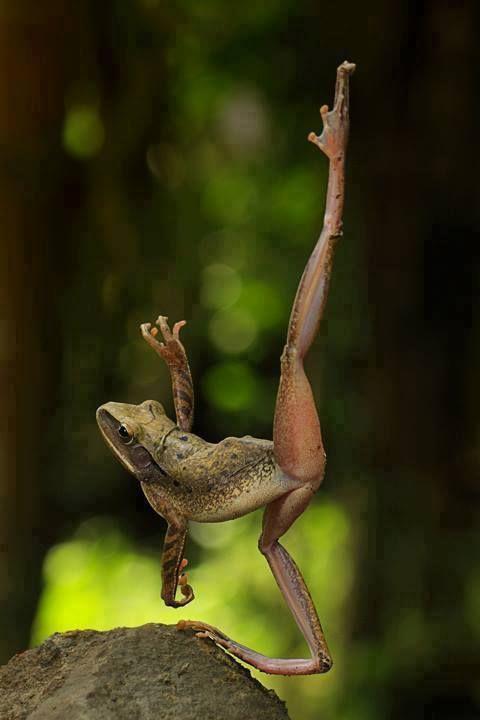 .frog ballet