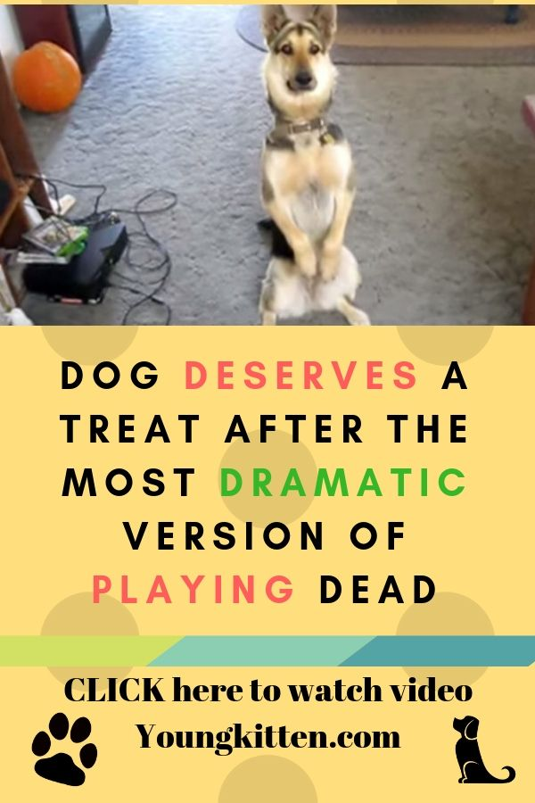 Dog Deserves A Treat After The Most Dramatic Version Of Playing