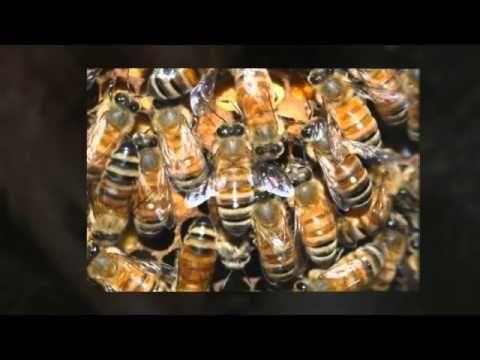 Bug Extermination Poway Ca Pest Exterminator