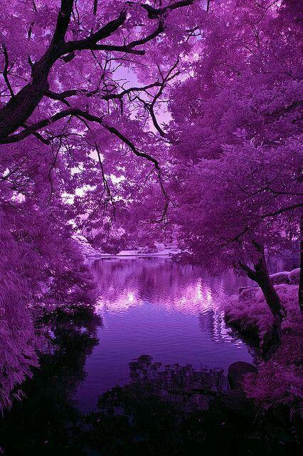 Purple flowering trees & beautiful lake/water..