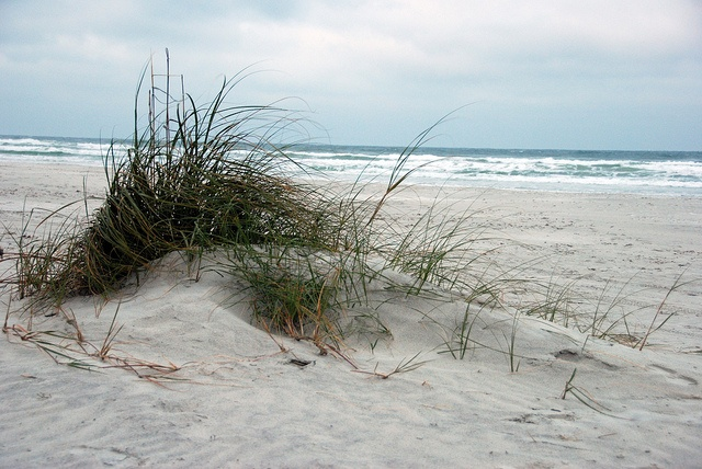 25 best ideas about new smyrna beach on pinterest for New smyrna beach fishing spots