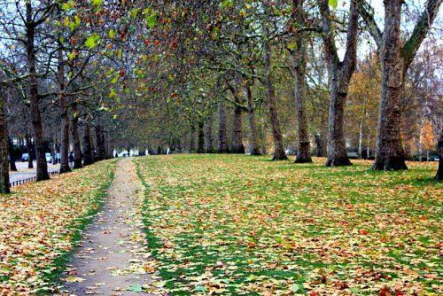 St James Park London - Photos by Garnet Allwright