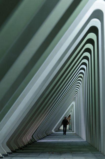 Liège-Guillemins train station designed by Santiago Calatrava