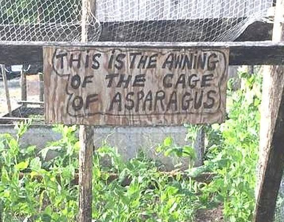 This is the awning of the cage of asparagus 😂