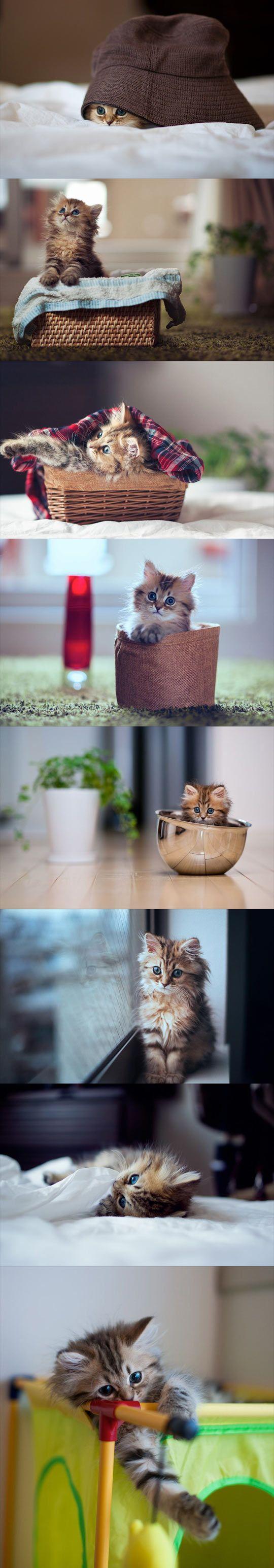 cute-cat-kitten-little-pictures-photos-bowl