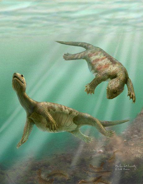 Odontochelys semitestacea (tortuga con dientes y medio caparazón).