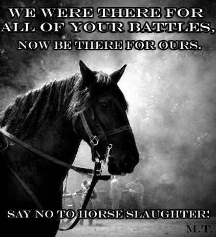 how to stop horse slaughter