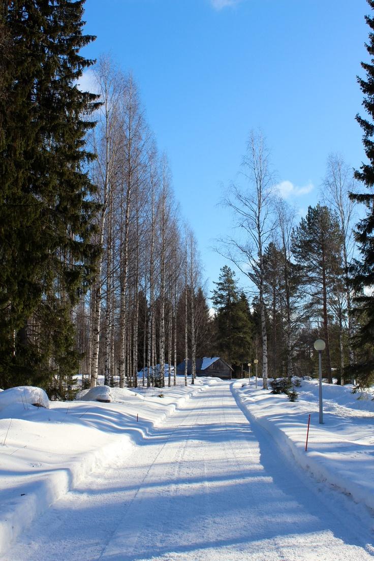 Winter in Punkaharju