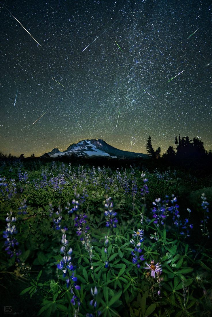 The Perseid meteor shower over Mt. Hood