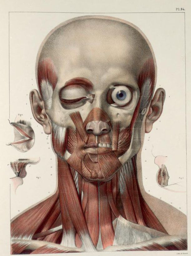 193 best anatomy images on Pinterest | Human anatomy, Human body and ...