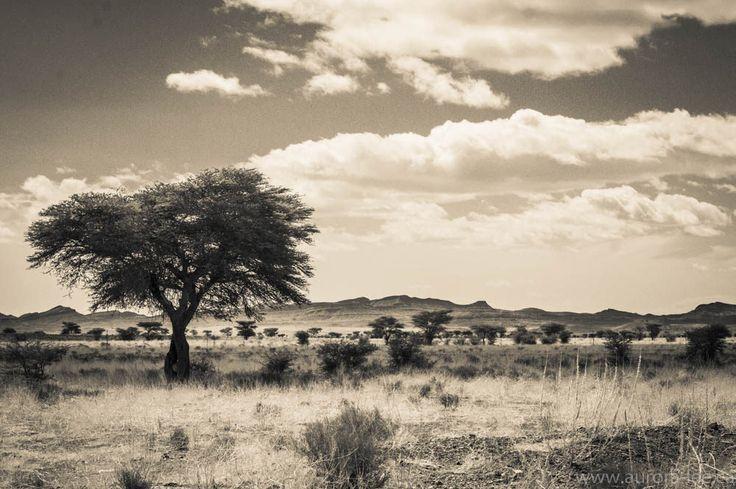 https://flic.kr/p/Qcx8TK | Infrared Sahara | Driving through the Sahara