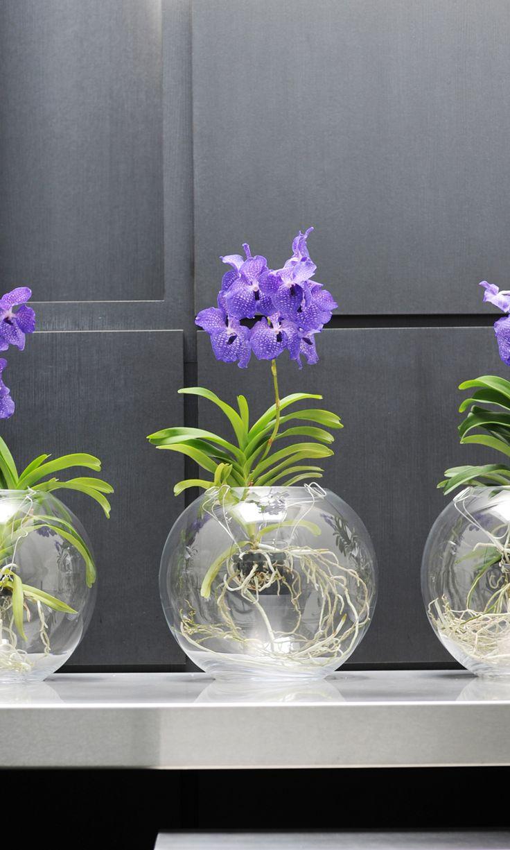 The Vanda grows best in a light spot in a glass vase!
