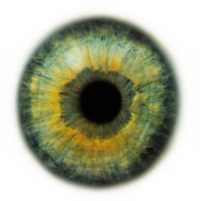 human eye, macro, by Rankin (Eyescapes series)