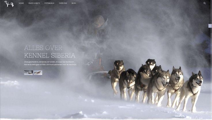 #Kennel - voorbeeld website voor #hondenfokkers en #hondenkennels, Met dummy tekst maar wel met foto's en functionaliteit