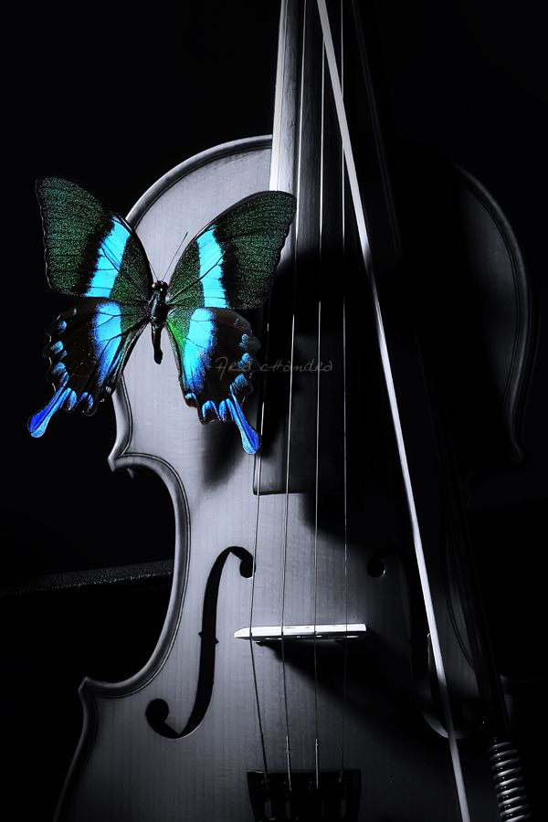 "butterfly and violin color ""splash""                                                                                                                                                                                 Mais"