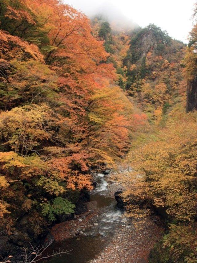 埼玉県の中津峡の2017紅葉情報。例年の色づき時期や見頃、地図・天気・交通アクセス情報はもちろん、ライトアップ日時やイベントなど開催情報をご案内。クチコミ・穴場情報も募集しています。